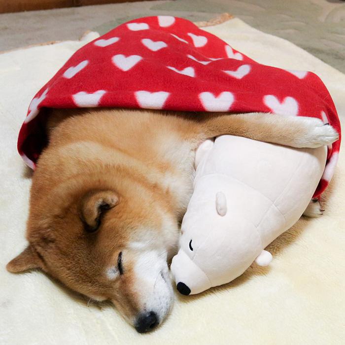 Як зворушливо спить милий песик із своїм плюшевим двійником  - фото 5