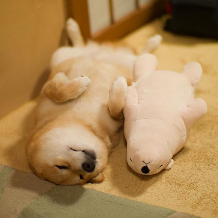 Як зворушливо спить милий песик із своїм плюшевим двійником  - фото 4