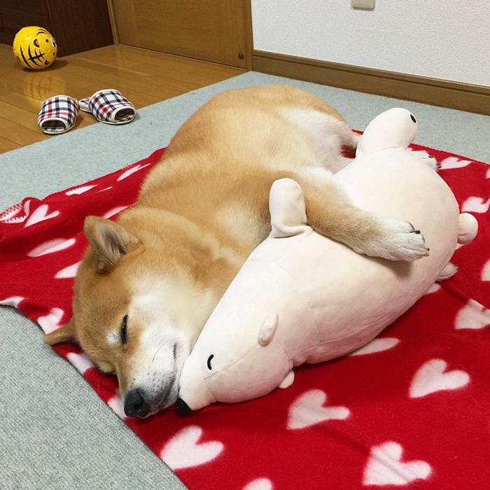 Як зворушливо спить милий песик із своїм плюшевим двійником  - фото 2