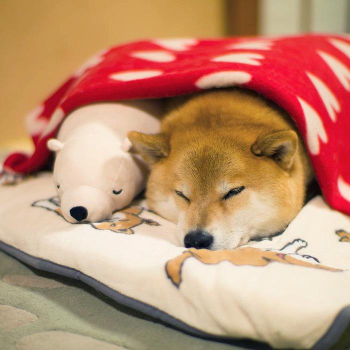 Як зворушливо спить милий песик із своїм плюшевим двійником  - фото 1