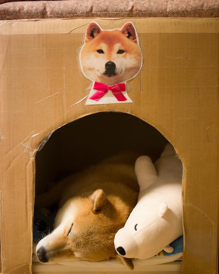 Як зворушливо спить милий песик із своїм плюшевим двійником  - фото 3