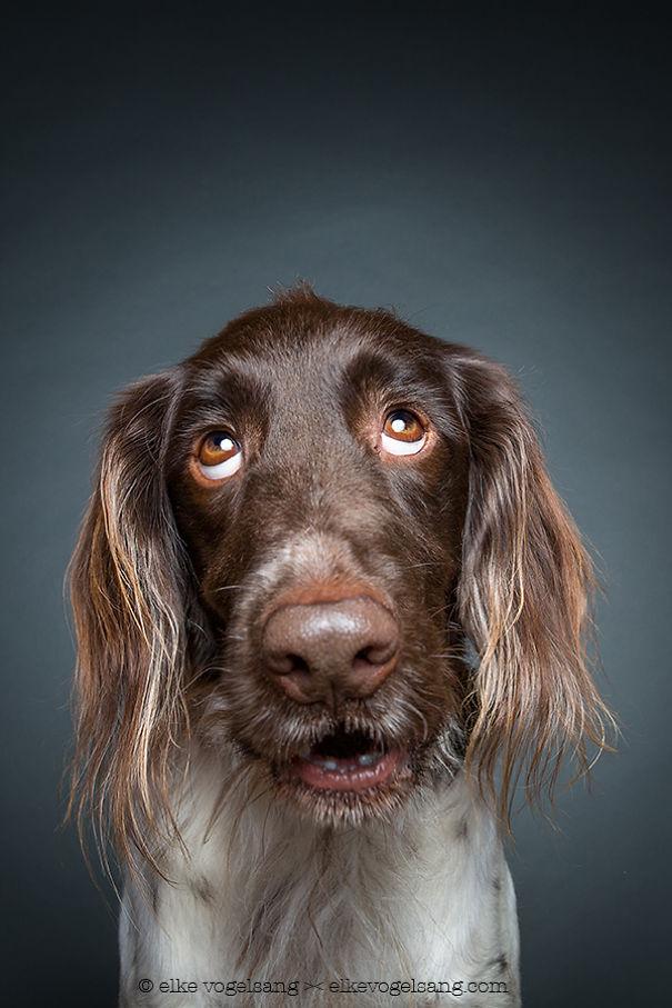 ТОП-7 собак, які думають, що фотограф дурень - фото 4