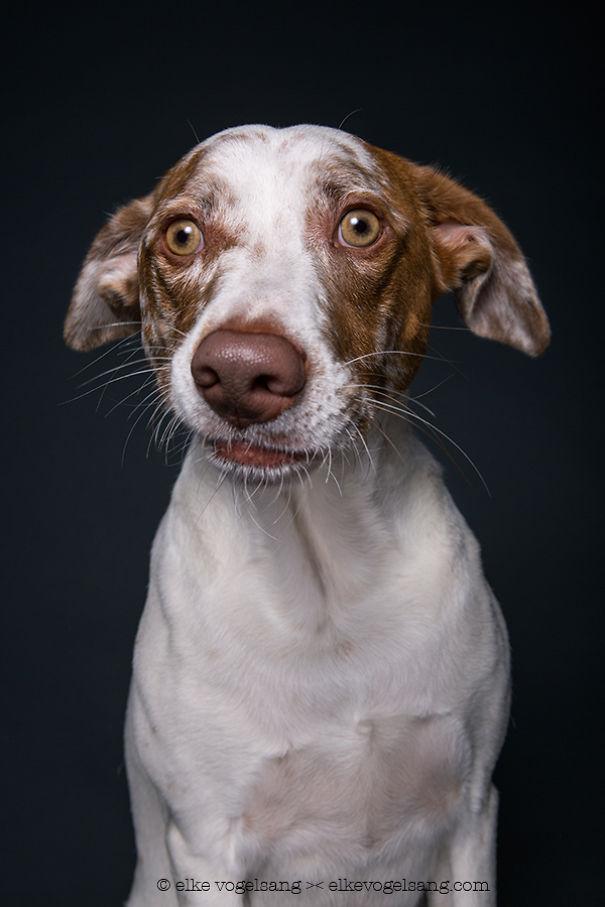 ТОП-7 собак, які думають, що фотограф дурень - фото 6