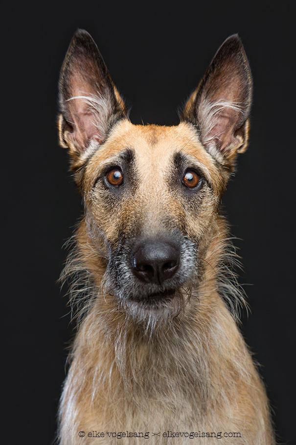 ТОП-7 собак, які думають, що фотограф дурень - фото 5