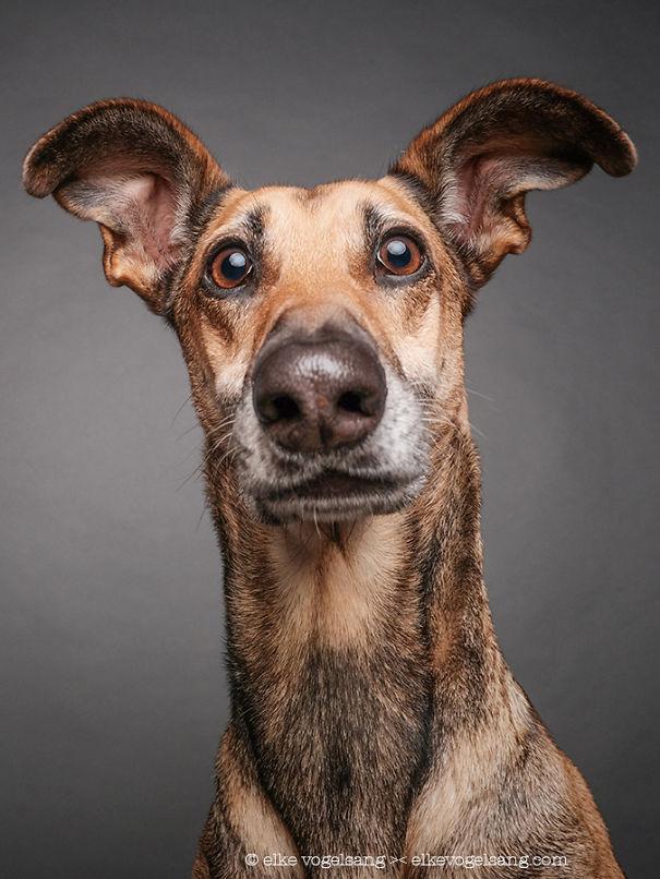ТОП-7 собак, які думають, що фотограф дурень - фото 3