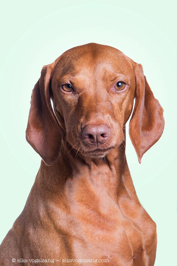 ТОП-7 собак, які думають, що фотограф дурень - фото 2