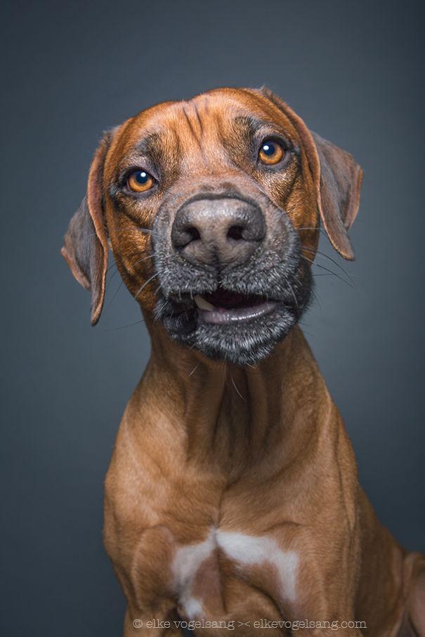 ТОП-7 собак, які думають, що фотограф дурень - фото 1