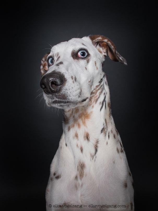 ТОП-7 собак, які думають, що фотограф дурень - фото 7