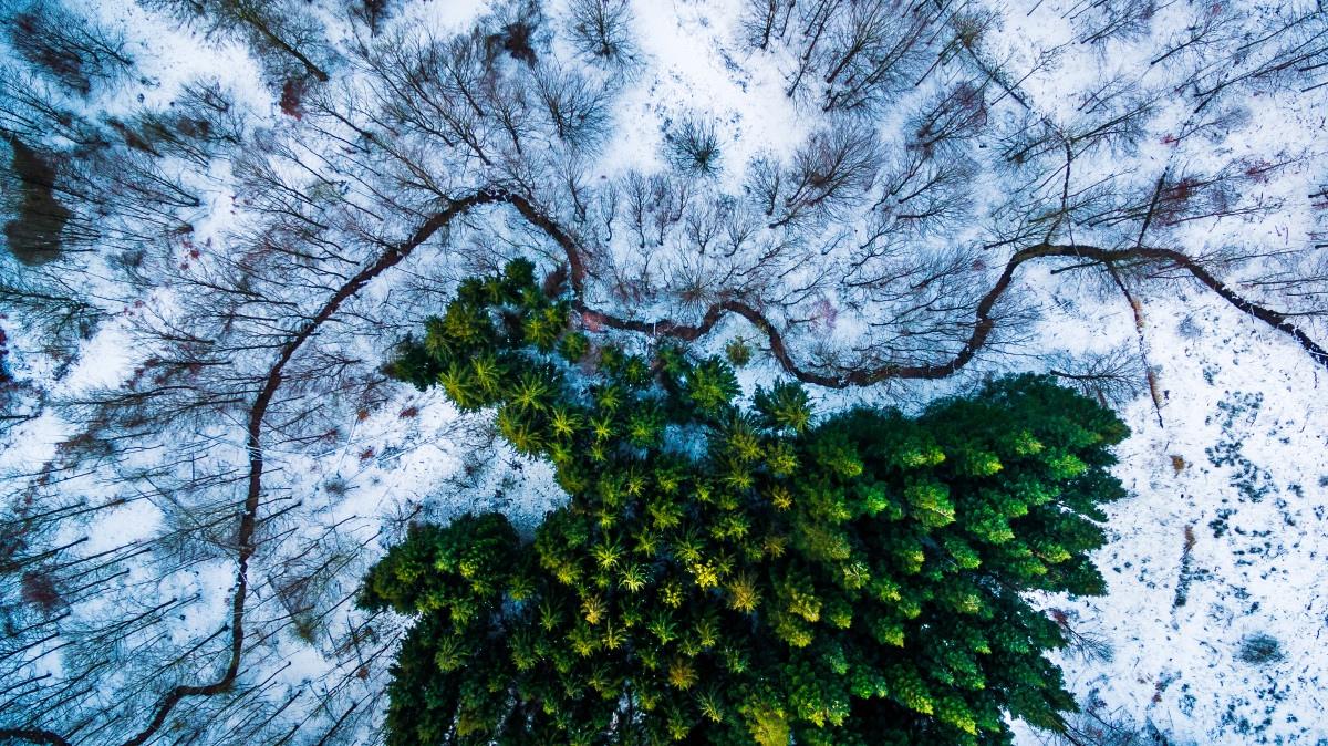 ТОП-9 найдивовижніших фото, зроблених дронами  - фото 9