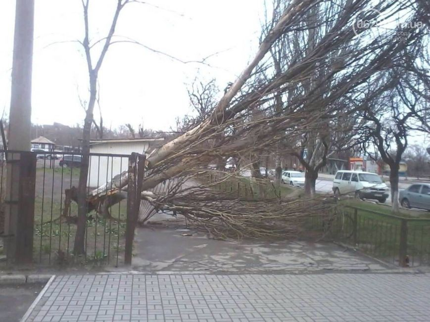 Маріуполем пройшовся потужний шторм: дерева вирвало з корінням (ФОТО) - фото 1