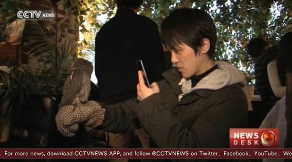 Коти більше не в моді: В Японії відкрили кав'ярню із совами - фото 1