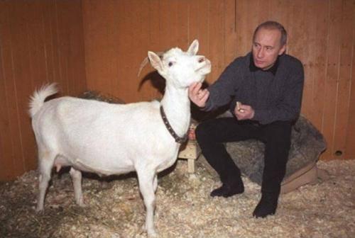 Соцмережі висміяли сімейні цінності Путіна - фото 5