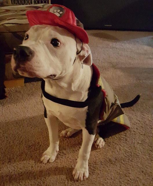 Врятований з вогню пес став пожежним - фото 1