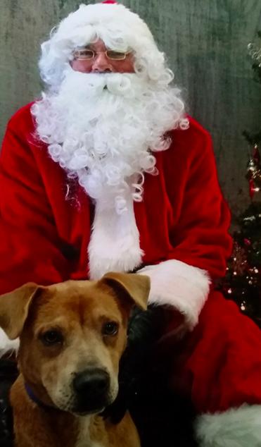 Як парочка влаштувала собачий Новий рік - фото 6
