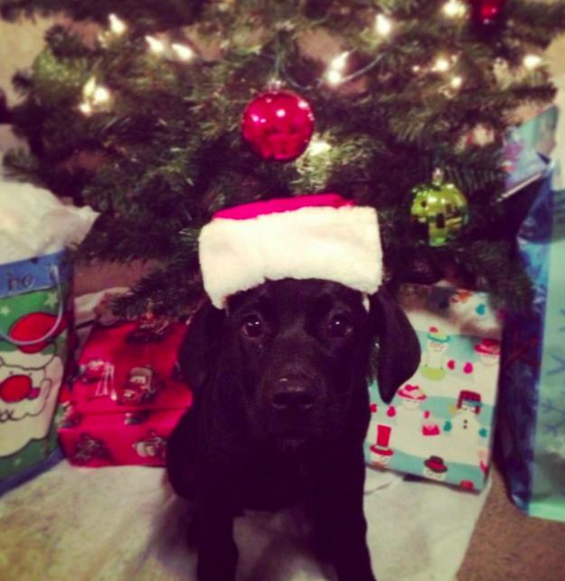 Як парочка влаштувала собачий Новий рік - фото 4