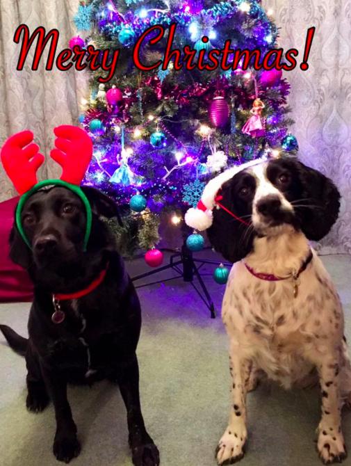 Як парочка влаштувала собачий Новий рік - фото 3