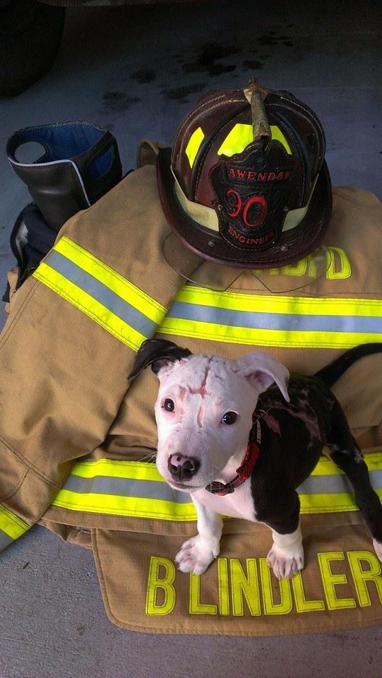 Врятований з вогню пес став пожежним - фото 3
