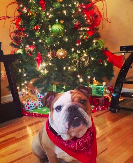 Як парочка влаштувала собачий Новий рік - фото 2