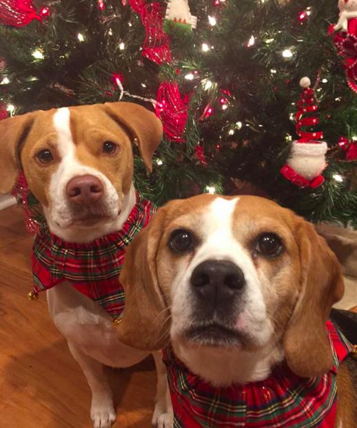 Як парочка влаштувала собачий Новий рік - фото 7
