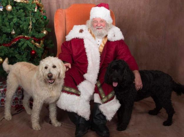 Як парочка влаштувала собачий Новий рік - фото 5