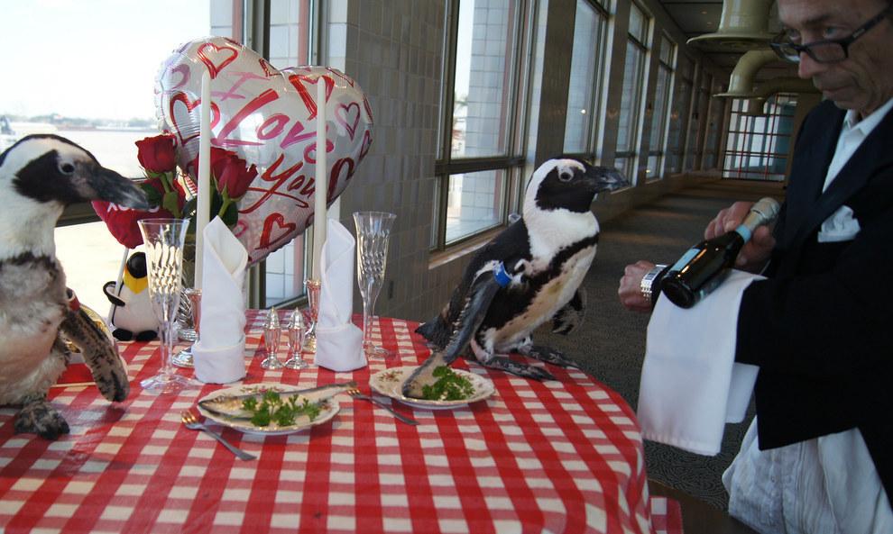 Як подружжя пінгвінів, яке разом вже 22 роки, святкувало День закоханих - фото 2