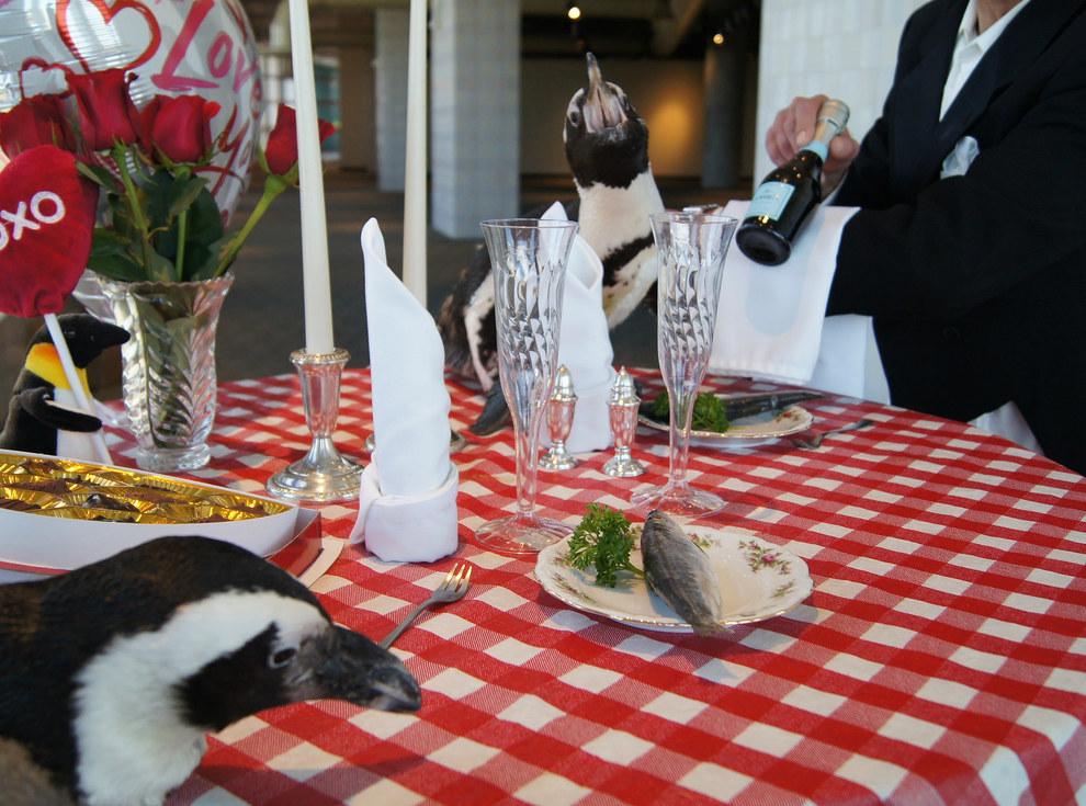 Як подружжя пінгвінів, яке разом вже 22 роки, святкувало День закоханих - фото 1