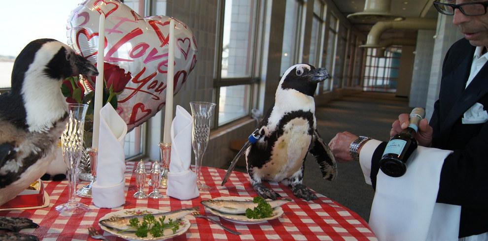 Як подружжя пінгвінів, яке разом вже 22 роки, святкувало День закоханих - фото 3