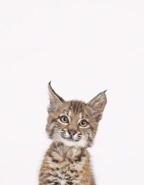 Як би виглядали дикі тварини на фото у паспорті - фото 2