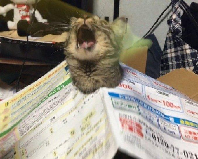Як виглядає котячий спокій та паніка в одну мить - фото 2