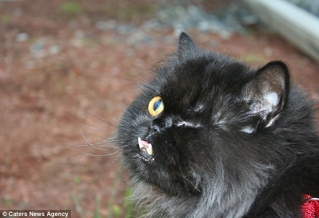 Як одноокий кіт-вампір знайшов сім'ю - фото 2