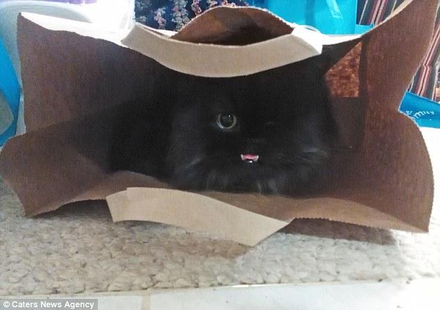 Як одноокий кіт-вампір знайшов сім'ю - фото 4