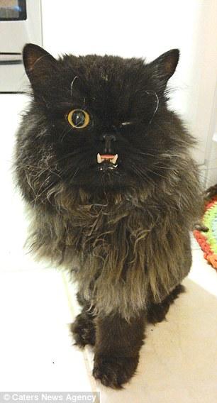 Як одноокий кіт-вампір знайшов сім'ю - фото 1