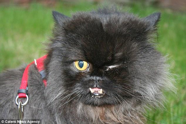 Як одноокий кіт-вампір знайшов сім'ю - фото 3