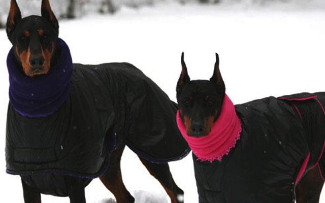 Холод собачий: ТОП-20 собак у зимовому одязі - фото 13