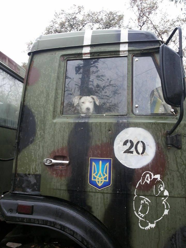 Чим займаються на Донбасі найкращі друзі бійців АТО - фото 20