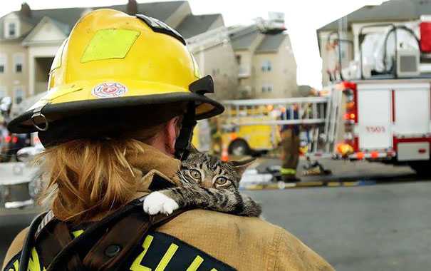 Як пожежники рятують тварин: ТОП-7 зворушливих фото - фото 1