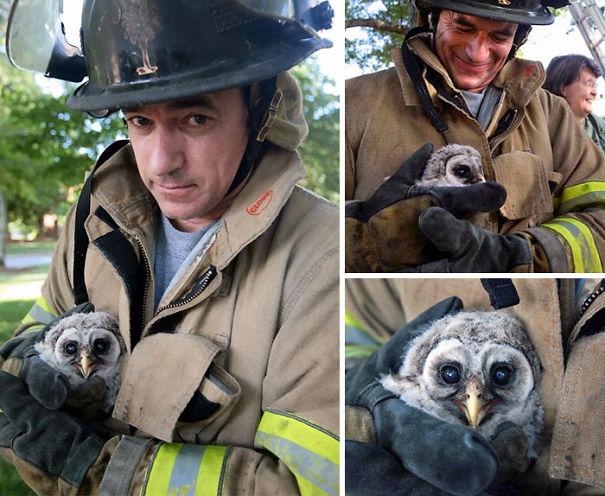 Як пожежники рятують тварин: ТОП-7 зворушливих фото - фото 2