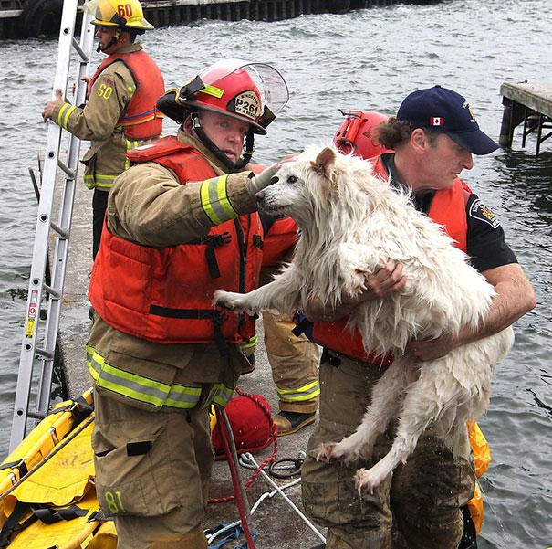 Як пожежники рятують тварин: ТОП-7 зворушливих фото - фото 4