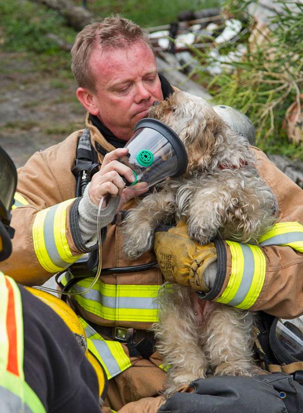 Як пожежники рятують тварин: ТОП-7 зворушливих фото - фото 3