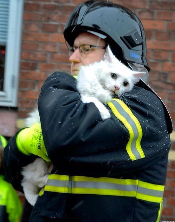 Як пожежники рятують тварин: ТОП-7 зворушливих фото - фото 5