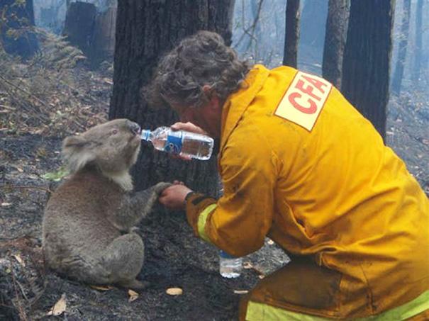 Як пожежники рятують тварин: ТОП-7 зворушливих фото - фото 6