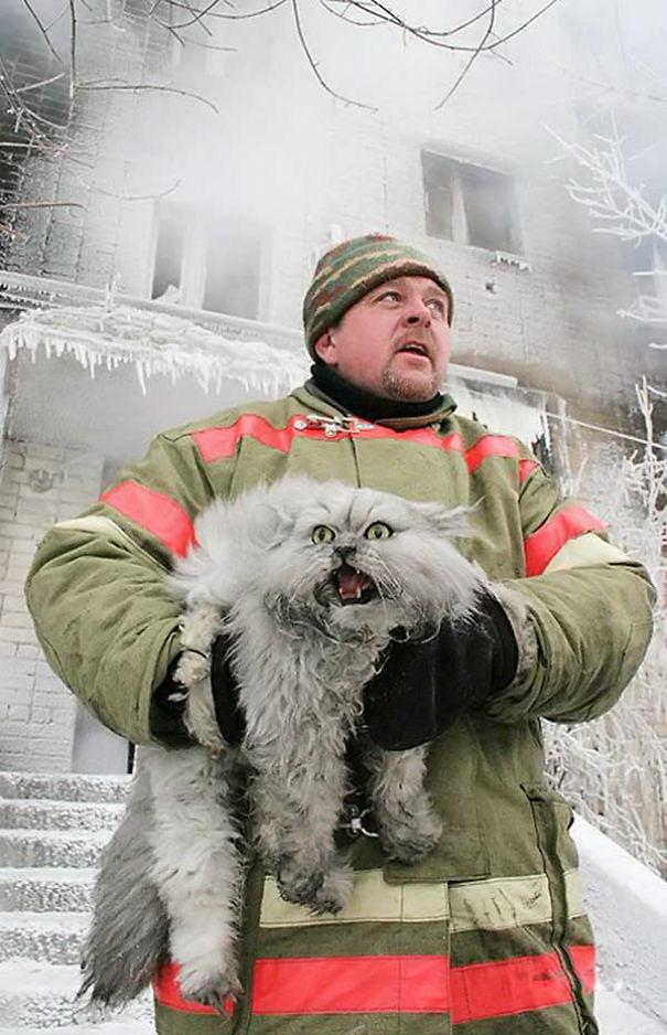 Як пожежники рятують тварин: ТОП-7 зворушливих фото - фото 7
