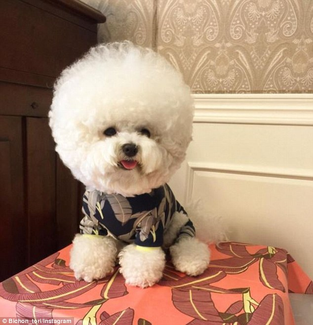 Гламурний собака з головою-кулею став інтернет-сенсацією - фото 2