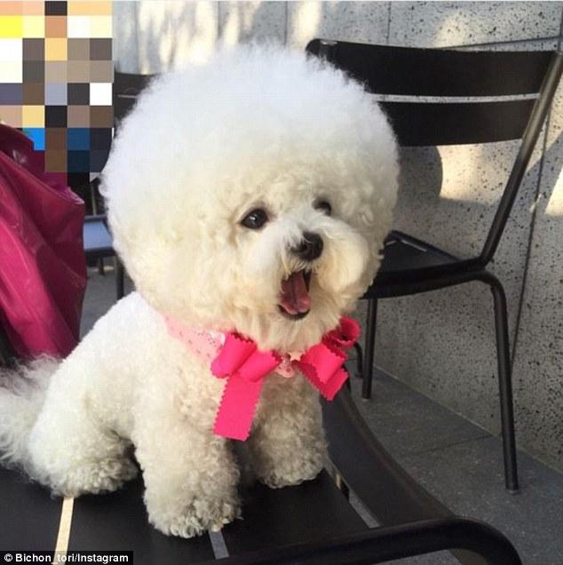Гламурний собака з головою-кулею став інтернет-сенсацією - фото 3
