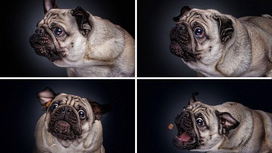 Фотограф зробив приголомшливі знімки собак з їжею - фото 2