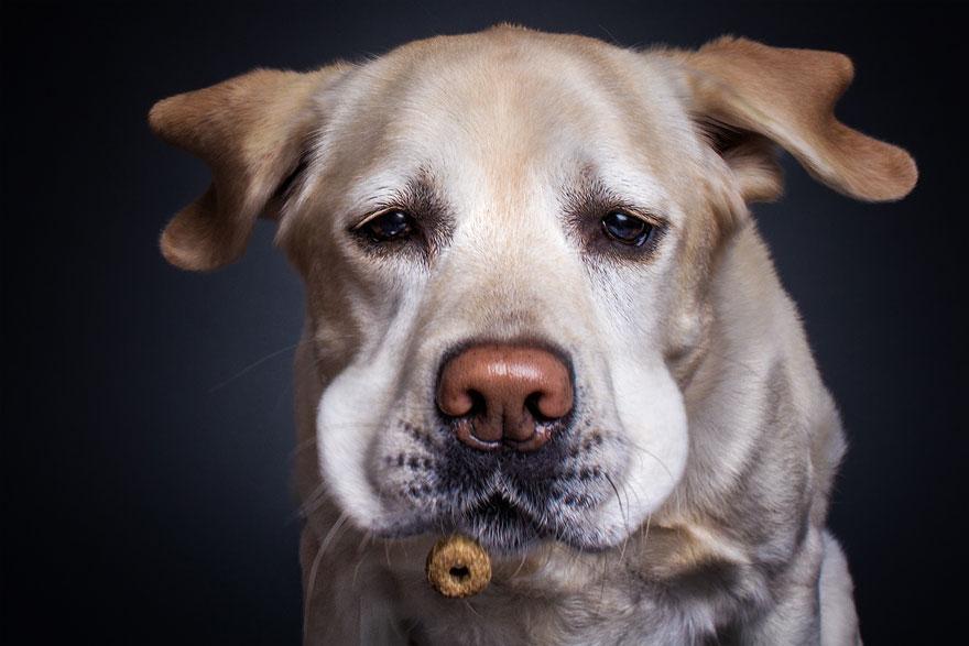 Фотограф зробив приголомшливі знімки собак з їжею - фото 3