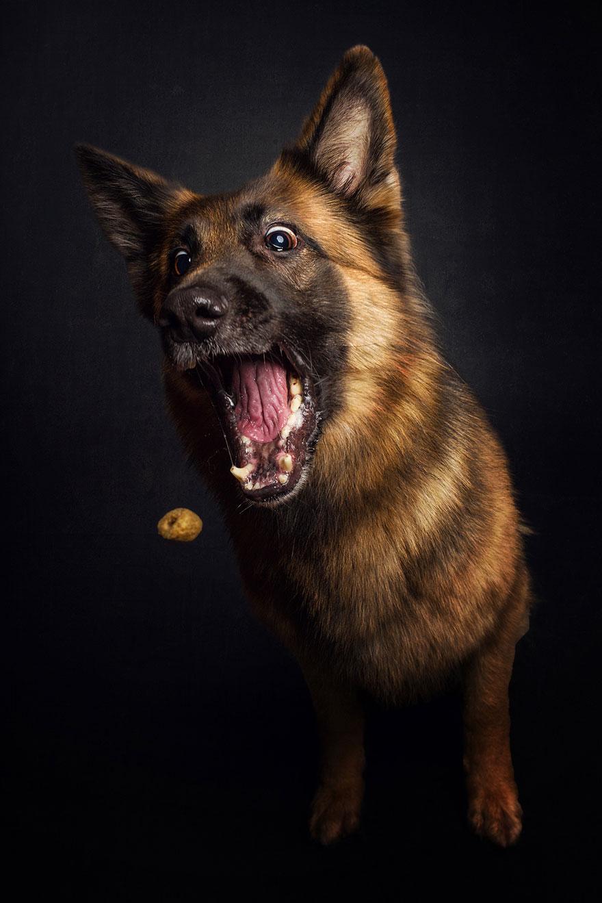 Фотограф зробив приголомшливі знімки собак з їжею - фото 4