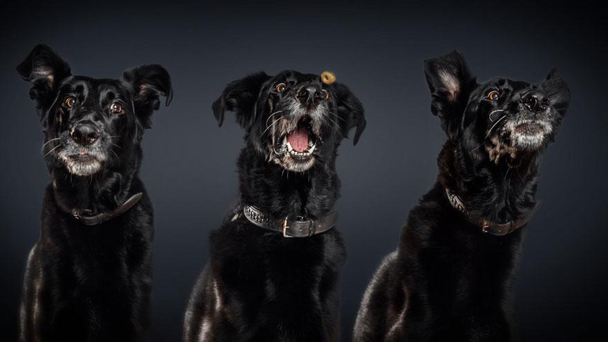 Фотограф зробив приголомшливі знімки собак з їжею - фото 9