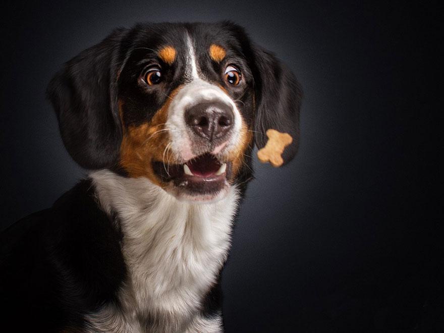 Фотограф зробив приголомшливі знімки собак з їжею - фото 5