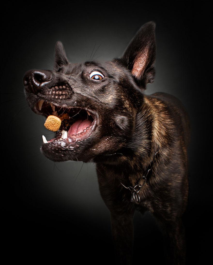 Фотограф зробив приголомшливі знімки собак з їжею - фото 10